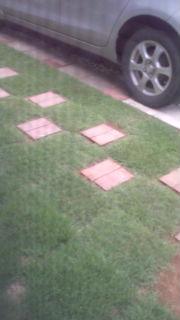 実家の芝生
